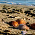 5 buoni motivi per visitare Marina di Ravenna
